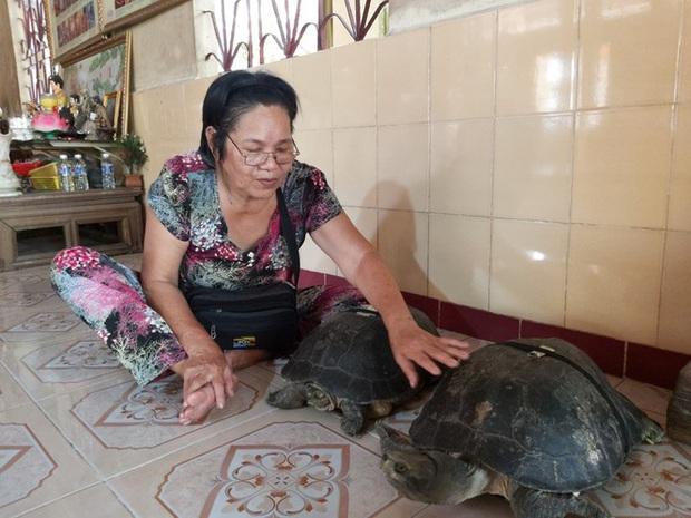 Kỳ lạ cụ rùa hơn trăm tuổi ở miền Tây biết... nghe kinh, ăn chay và giữ cửa - Ảnh 2.