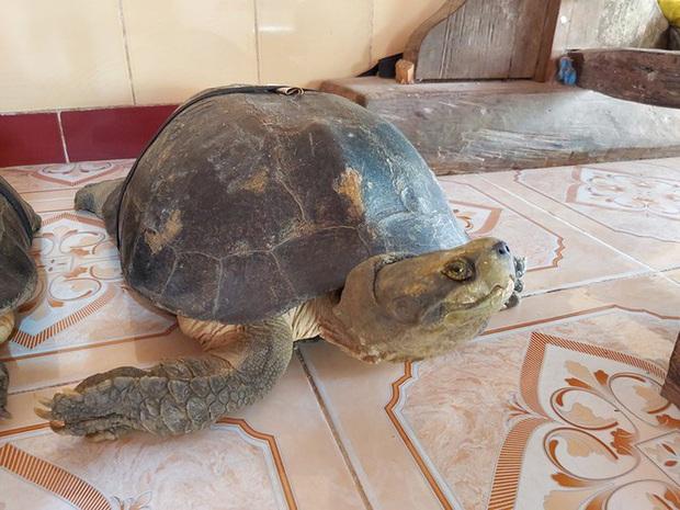 Kỳ lạ cụ rùa hơn trăm tuổi ở miền Tây biết... nghe kinh, ăn chay và giữ cửa - Ảnh 11.