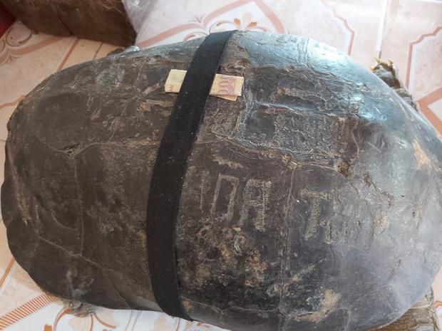Kỳ lạ cụ rùa hơn trăm tuổi ở miền Tây biết... nghe kinh, ăn chay và giữ cửa - Ảnh 12.