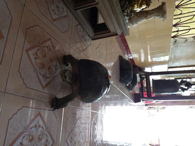 Kỳ lạ cụ rùa hơn trăm tuổi ở miền Tây biết... nghe kinh, ăn chay và giữ cửa - Ảnh 13.