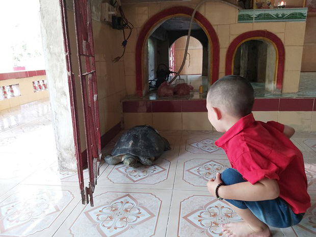 Kỳ lạ cụ rùa hơn trăm tuổi ở miền Tây biết... nghe kinh, ăn chay và giữ cửa - Ảnh 14.