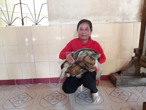 Kỳ lạ cụ rùa hơn trăm tuổi ở miền Tây biết... nghe kinh, ăn chay và giữ cửa - Ảnh 3.