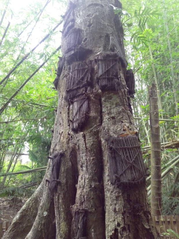 Sống chung và vệ sinh thi thể người chết: Việc làm nghe rùng rợn nhưng là văn hóa người Toraja cùng những lễ tang đắt đỏ thể hiện sự giàu sang - Ảnh 5.