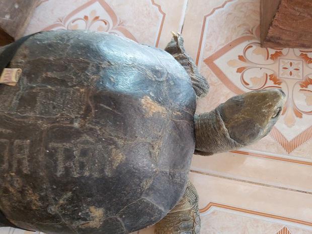 Kỳ lạ cụ rùa hơn trăm tuổi ở miền Tây biết... nghe kinh, ăn chay và giữ cửa - Ảnh 9.
