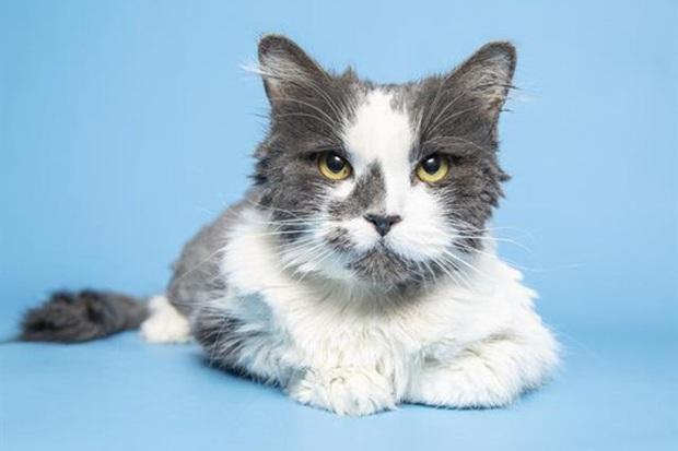 Bị bao phủ bởi 1kg lông rậm rạp, mèo hoang khiến nhiều người mới gặp phải bối rối vì không biết là con gì - Ảnh 3.