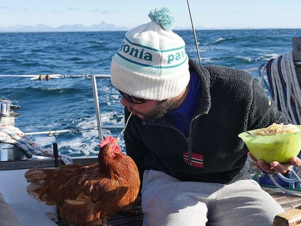 Cô gà mái đi du lịch vòng quanh thế giới cùng người bạn thủy thủ trẻ tuổi - Ảnh 2.