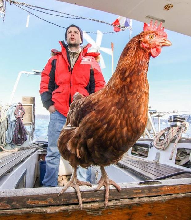 Cô gà mái đi du lịch vòng quanh thế giới cùng người bạn thủy thủ trẻ tuổi - Ảnh 1.