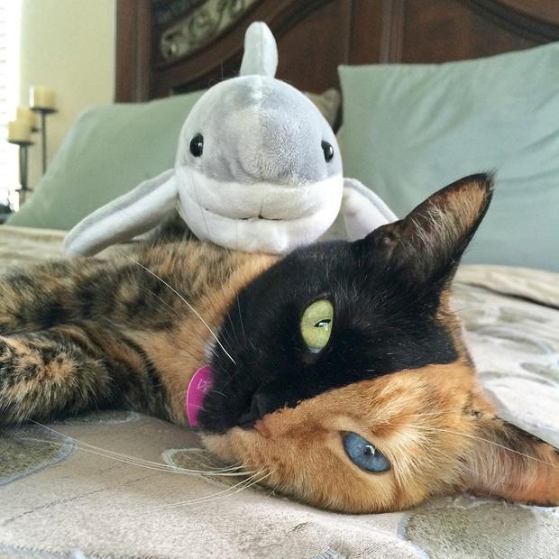 Gặp những chú mèo hai mặt có năng lực đốn tim cực mạnh khiến cư dân mạng ngắm mãi không thôi - Ảnh 6.