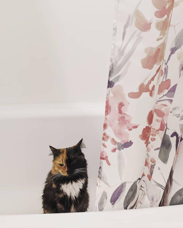Gặp những chú mèo hai mặt có năng lực đốn tim cực mạnh khiến cư dân mạng ngắm mãi không thôi - Ảnh 5.