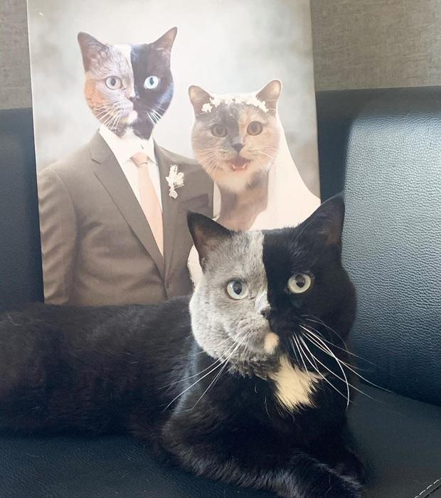 Gặp những chú mèo hai mặt có năng lực đốn tim cực mạnh khiến cư dân mạng ngắm mãi không thôi - Ảnh 14.
