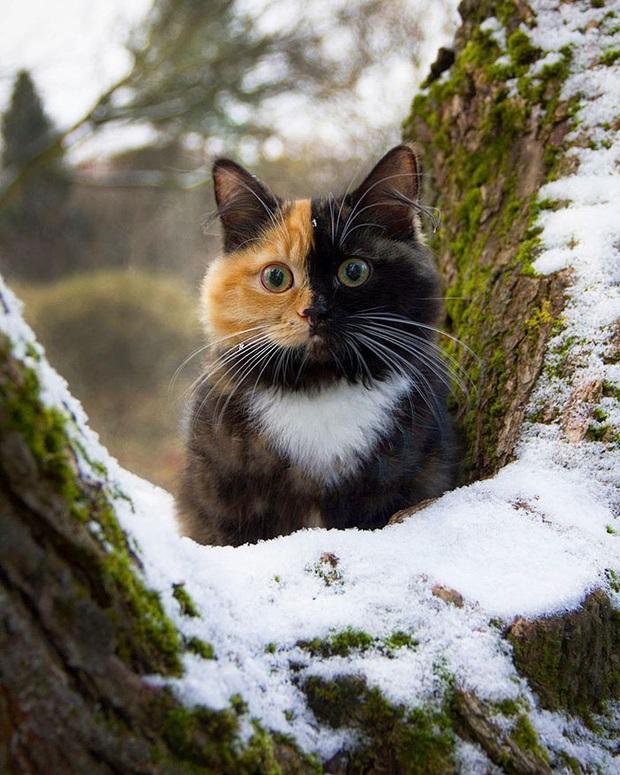 Gặp những chú mèo hai mặt có năng lực đốn tim cực mạnh khiến cư dân mạng ngắm mãi không thôi - Ảnh 1.