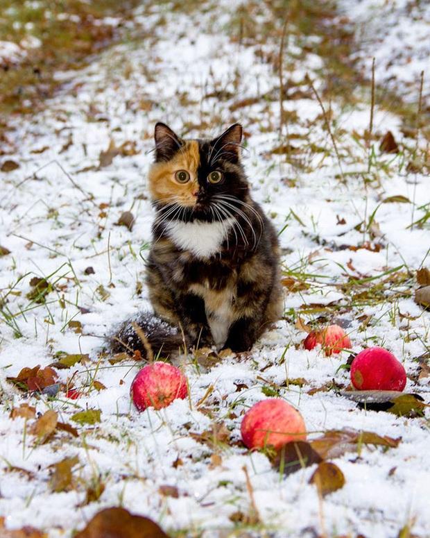 Gặp những chú mèo hai mặt có năng lực đốn tim cực mạnh khiến cư dân mạng ngắm mãi không thôi - Ảnh 2.