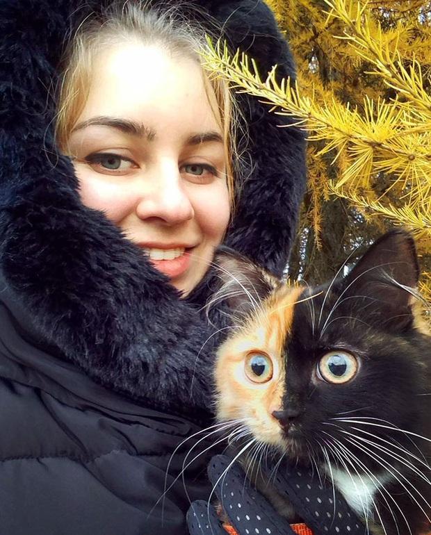 Gặp những chú mèo hai mặt có năng lực đốn tim cực mạnh khiến cư dân mạng ngắm mãi không thôi - Ảnh 4.