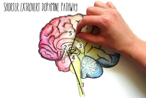 Bên trong não người hướng nội có gì mà khiến họ hay bị hiểu nhầm là nhút nhát, thụ động, ít nói? - Ảnh 2.