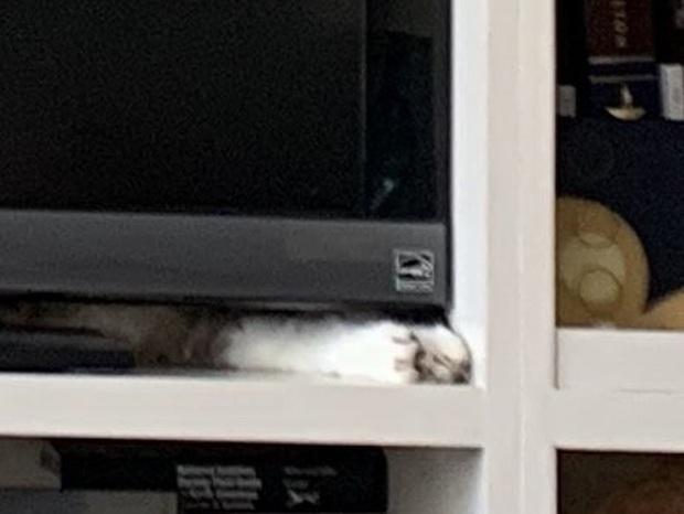 Con mèo ở đâu? Bức ảnh này đã gây bão trên mạng xã hội Twitter những ngày qua - Ảnh 4.