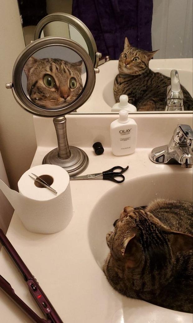 Không chỉ con người, thú cưng đôi lúc cũng tự luyến ngắm mình trong gương đắm đuối - Ảnh 3.