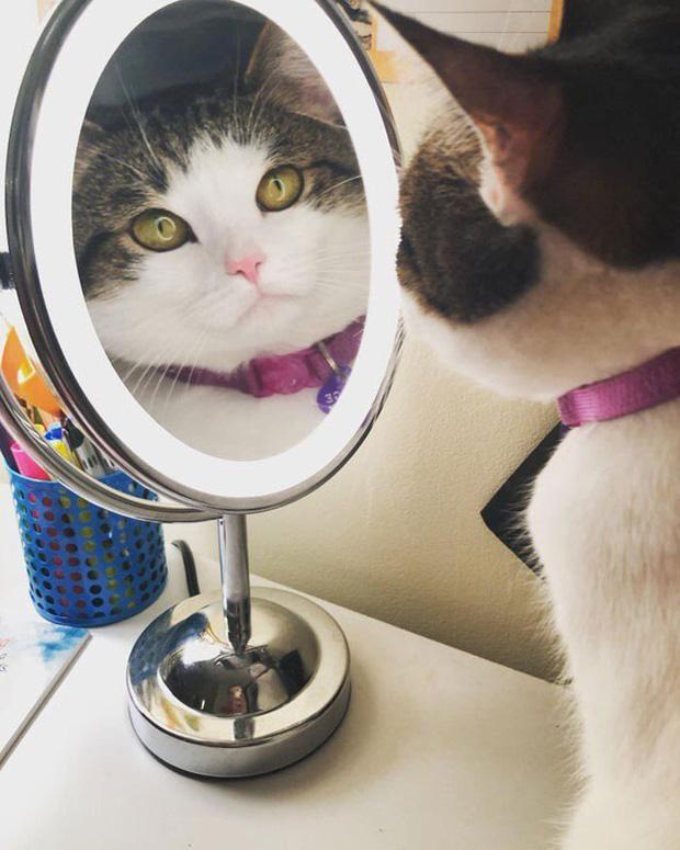 Không chỉ con người, thú cưng đôi lúc cũng tự luyến ngắm mình trong gương đắm đuối - Ảnh 4.