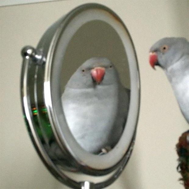 Không chỉ con người, thú cưng đôi lúc cũng tự luyến ngắm mình trong gương đắm đuối - Ảnh 5.