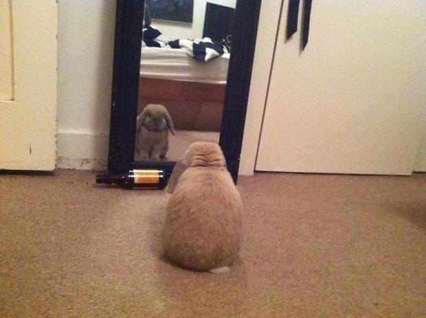 Không chỉ con người, thú cưng đôi lúc cũng tự luyến ngắm mình trong gương đắm đuối - Ảnh 7.