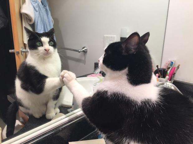 Không chỉ con người, thú cưng đôi lúc cũng tự luyến ngắm mình trong gương đắm đuối - Ảnh 8.