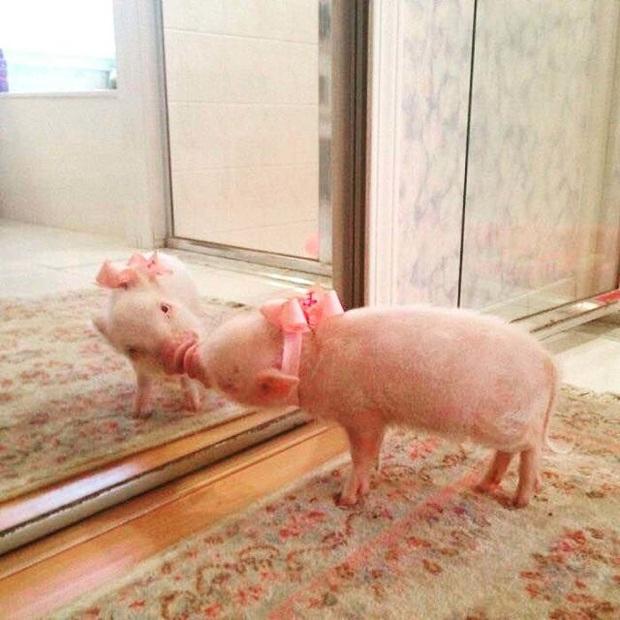 Không chỉ con người, thú cưng đôi lúc cũng tự luyến ngắm mình trong gương đắm đuối - Ảnh 9.