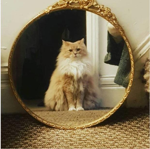 Không chỉ con người, thú cưng đôi lúc cũng tự luyến ngắm mình trong gương đắm đuối - Ảnh 10.