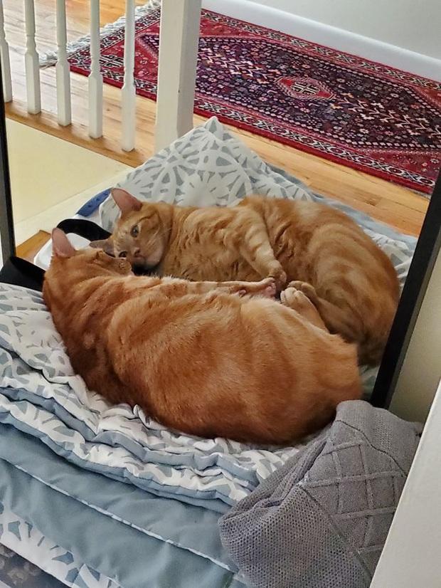 Không chỉ con người, thú cưng đôi lúc cũng tự luyến ngắm mình trong gương đắm đuối - Ảnh 11.