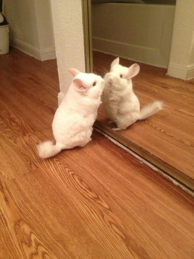 Không chỉ con người, thú cưng đôi lúc cũng tự luyến ngắm mình trong gương đắm đuối - Ảnh 12.