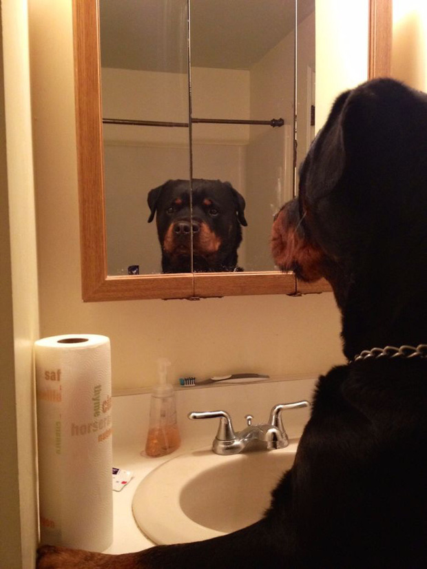 Không chỉ con người, thú cưng đôi lúc cũng tự luyến ngắm mình trong gương đắm đuối - Ảnh 13.