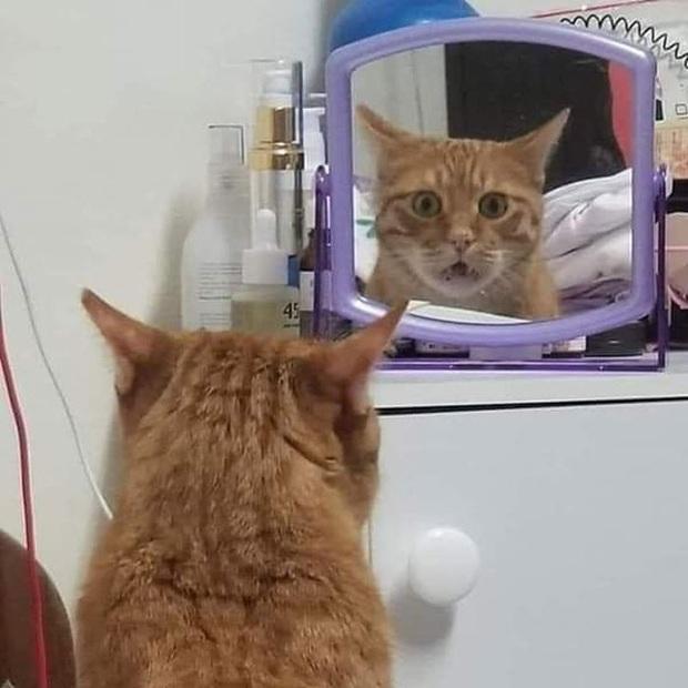 Không chỉ con người, thú cưng đôi lúc cũng tự luyến ngắm mình trong gương đắm đuối - Ảnh 16.