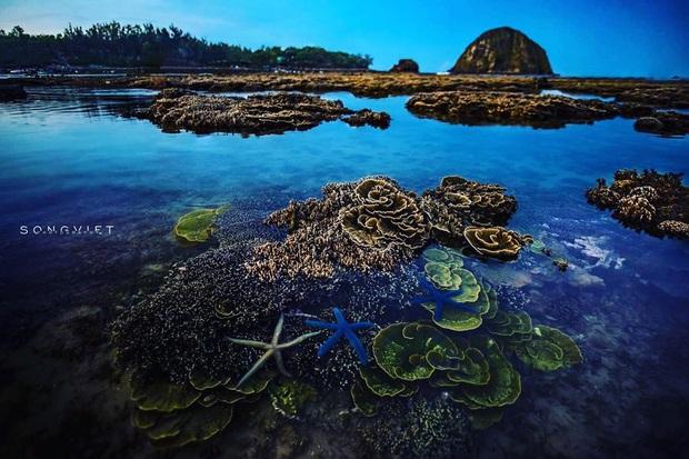 """Mấy ai biết Việt Nam có một hòn đảo san hô với vẻ đẹp """"siêu thực"""" thế này, xem ảnh mà cứ ngỡ đâu nước ngoài xa xôi - Ảnh 17."""