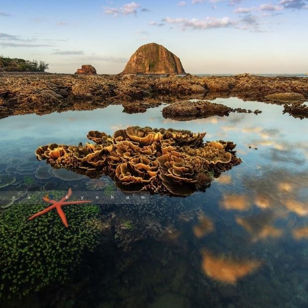 """Mấy ai biết Việt Nam có một hòn đảo san hô với vẻ đẹp """"siêu thực"""" thế này, xem ảnh mà cứ ngỡ đâu nước ngoài xa xôi - Ảnh 14."""