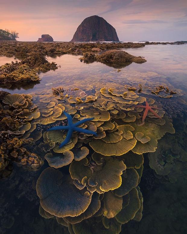 """Mấy ai biết Việt Nam có một hòn đảo san hô với vẻ đẹp """"siêu thực"""" thế này, xem ảnh mà cứ ngỡ đâu nước ngoài xa xôi - Ảnh 11."""