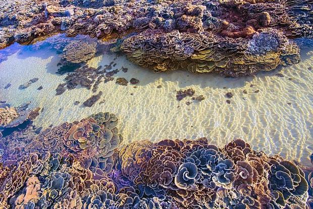 """Mấy ai biết Việt Nam có một hòn đảo san hô với vẻ đẹp """"siêu thực"""" thế này, xem ảnh mà cứ ngỡ đâu nước ngoài xa xôi - Ảnh 13."""