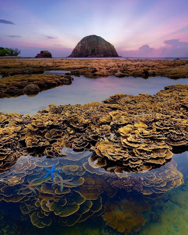 """Mấy ai biết Việt Nam có một hòn đảo san hô với vẻ đẹp """"siêu thực"""" thế này, xem ảnh mà cứ ngỡ đâu nước ngoài xa xôi - Ảnh 12."""