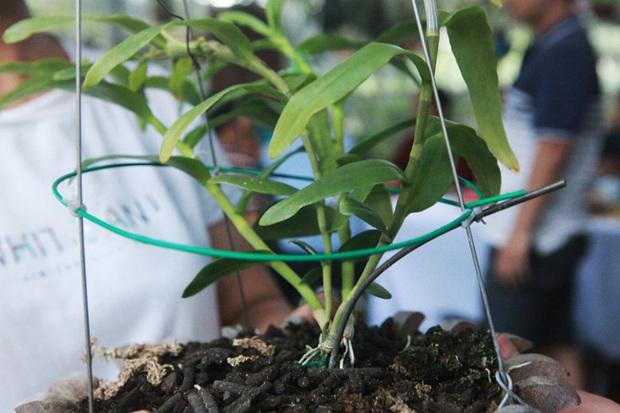 Đại gia Hà Nội chi mạnh 5 tỷ đồng mua giò lan đột biến nhìn như... ngọn rau muống - Ảnh 4.