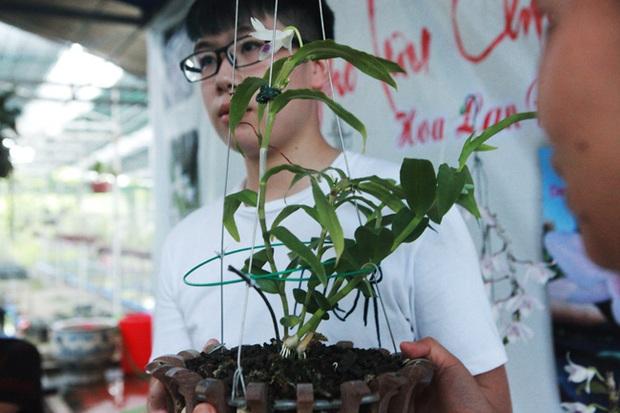 Đại gia Hà Nội chi mạnh 5 tỷ đồng mua giò lan đột biến nhìn như... ngọn rau muống - Ảnh 5.
