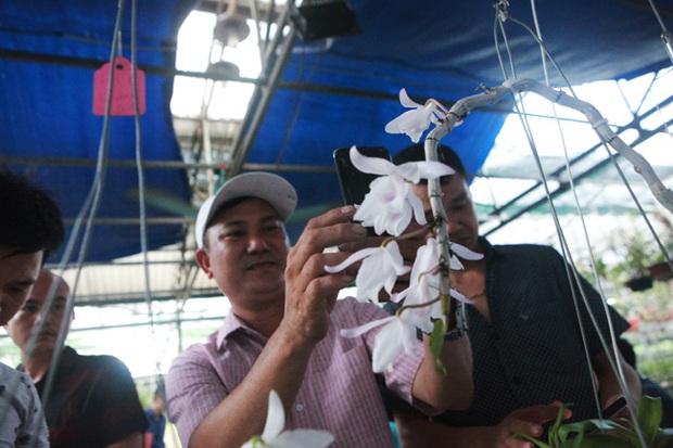 Đại gia Hà Nội chi mạnh 5 tỷ đồng mua giò lan đột biến nhìn như... ngọn rau muống - Ảnh 8.