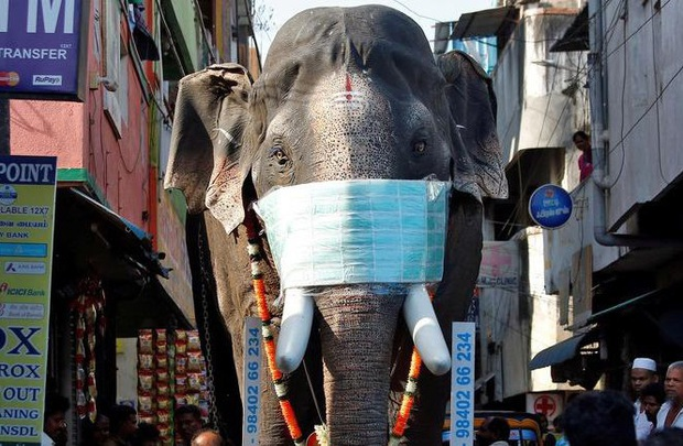 COVID-19: Ấn Độ đứng thứ 4 thế giới về số ca bệnh, 100 con voi được xét nghiệm - Ảnh 1.