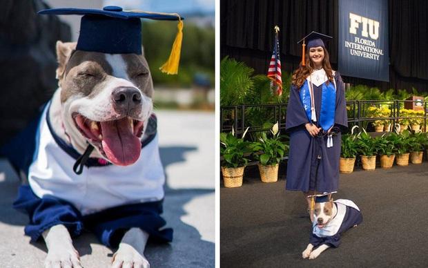 Đi học đều hơn cả sen, chú chó được trường đại học trao bằng cử nhân - Ảnh 2.