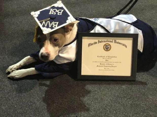 Đi học đều hơn cả sen, chú chó được trường đại học trao bằng cử nhân - Ảnh 3.