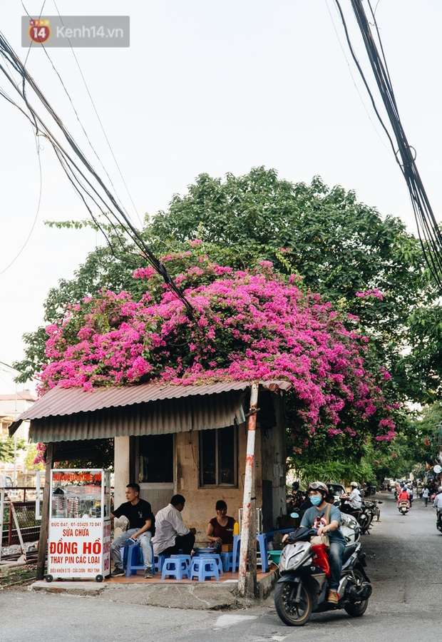 Những background check-in cùng hoa giấy thơ mộng nhất Hà Nội: Năm nào cũng thấy mà chưa bao giờ hết hot! - Ảnh 5.