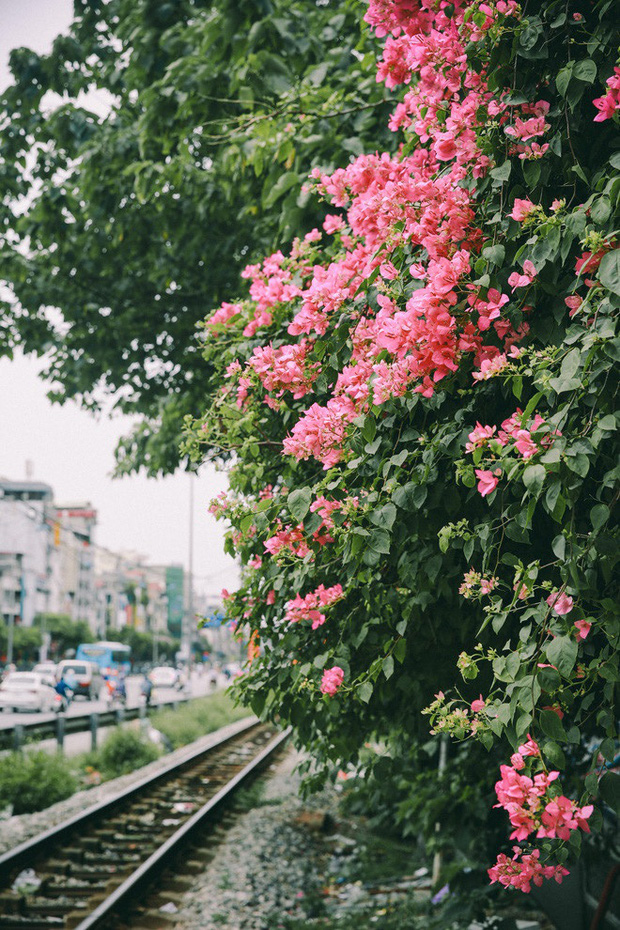 Những background check-in cùng hoa giấy thơ mộng nhất Hà Nội: Năm nào cũng thấy mà chưa bao giờ hết hot! - Ảnh 7.