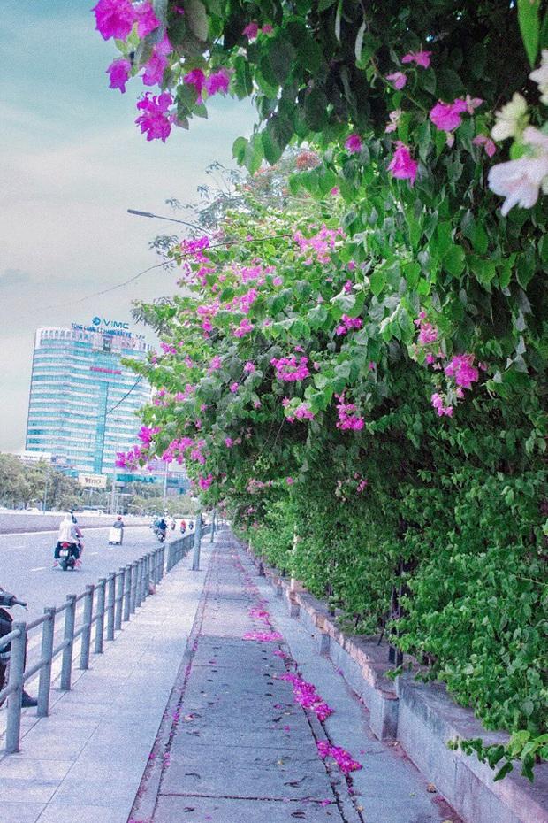 Những background check-in cùng hoa giấy thơ mộng nhất Hà Nội: Năm nào cũng thấy mà chưa bao giờ hết hot! - Ảnh 9.