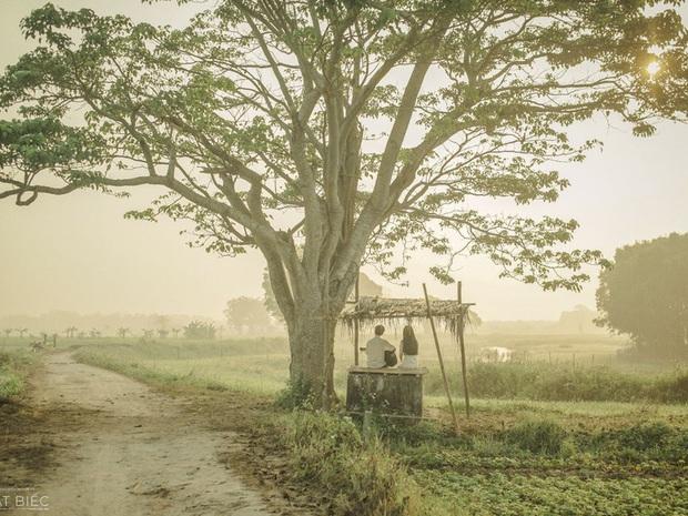 Cây bằng lăng cô đơn ở Bình Thuận nở hoa tím rợp trời, chụp góc nào cũng đẹp khiến ai nấy mê mẩn - Ảnh 1.