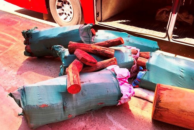 Phát hiện xe khách chở gỗ lậu ngụy trang tinh vi - Ảnh 2.