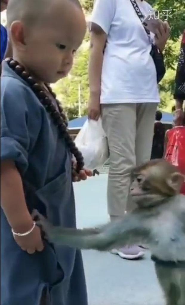 Khỉ con gây xúc động khi liên tục an ủi tiểu hòa thượng đeo lắc bạc vì lầm tưởng đó là xiềng xích giống trên cổ mình - Ảnh 1.