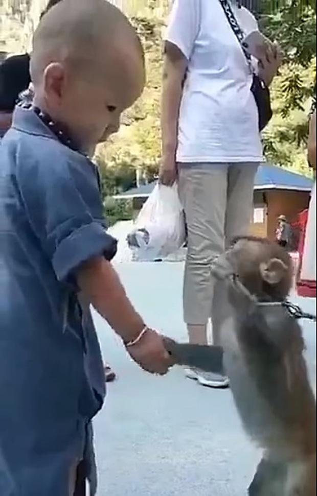 Khỉ con gây xúc động khi liên tục an ủi tiểu hòa thượng đeo lắc bạc vì lầm tưởng đó là xiềng xích giống trên cổ mình - Ảnh 2.