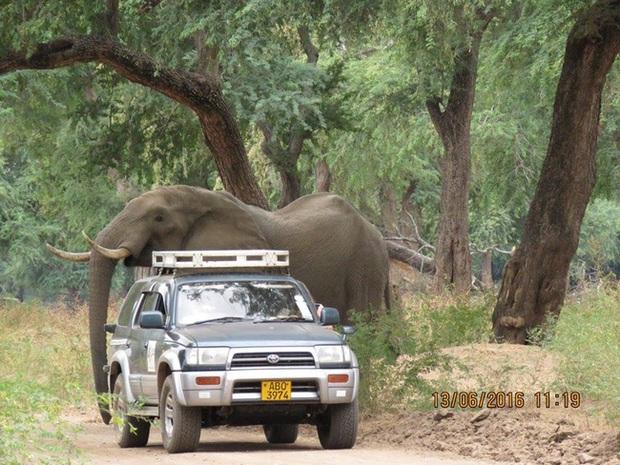 Kiểm tra lỗ thủng kỳ lạ trên đầu chú voi, bác sỹ thú y phát hiện sự thật đau buồn nhưng cũng bất ngờ vì cách hành xử của con vật - Ảnh 3.