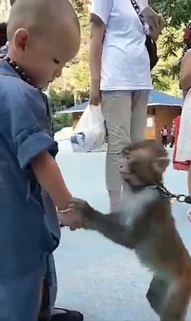 Khỉ con gây xúc động khi liên tục an ủi tiểu hòa thượng đeo lắc bạc vì lầm tưởng đó là xiềng xích giống trên cổ mình - Ảnh 3.